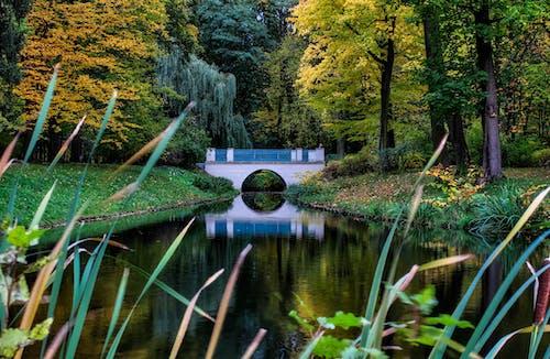 คลังภาพถ่ายฟรี ของ วอร์ซอ, สวนเมือง