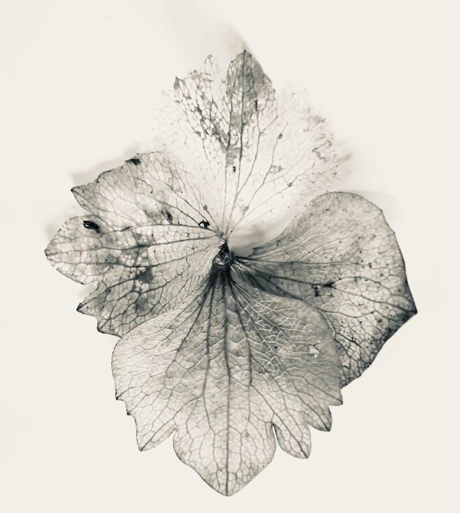 가을, 관념적인, 꽃의 무료 스톡 사진