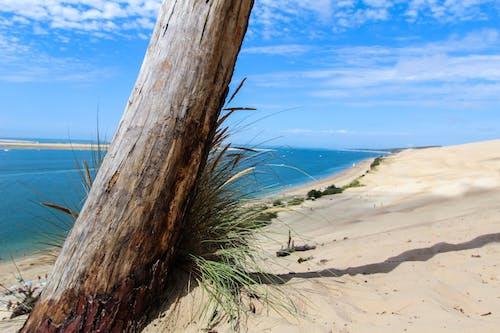 Free stock photo of Arcachon, Dune du Pyla