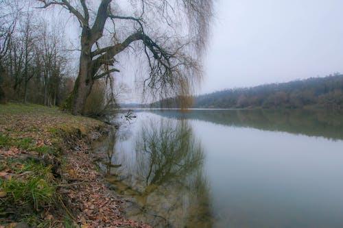Free stock photo of hungary, lake, winter