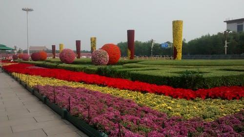 Free stock photo of china, gardens, tiananmen