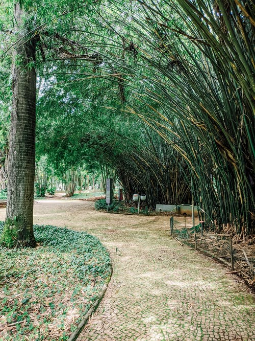 Walkway in The Park Shaded by Bamboo Trees