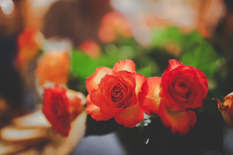 blomst, blomster, blomstrende