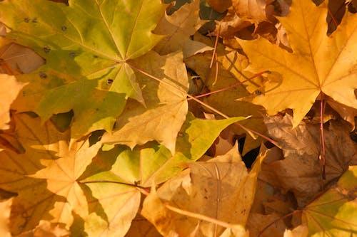 Fotos de stock gratuitas de amarillo, hojas amarillas, naturaleza