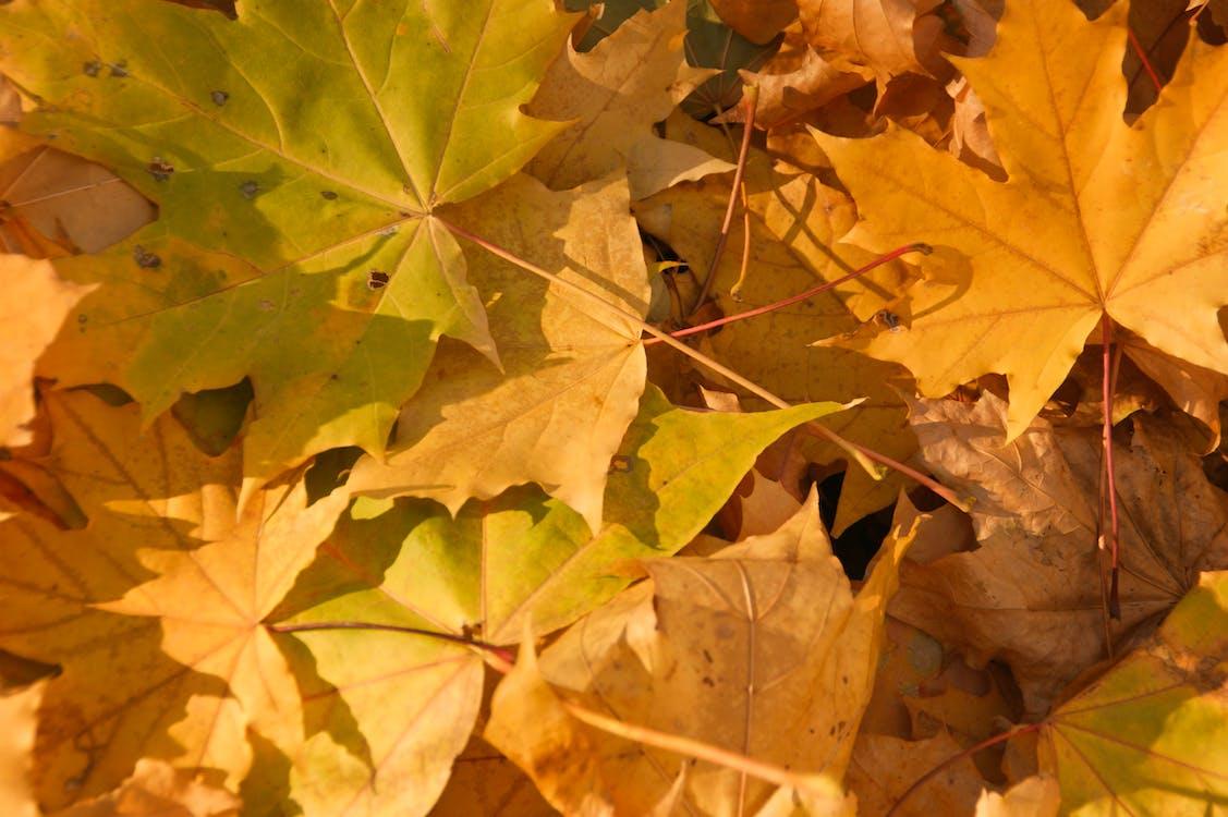 natura, żółte liście, żółty