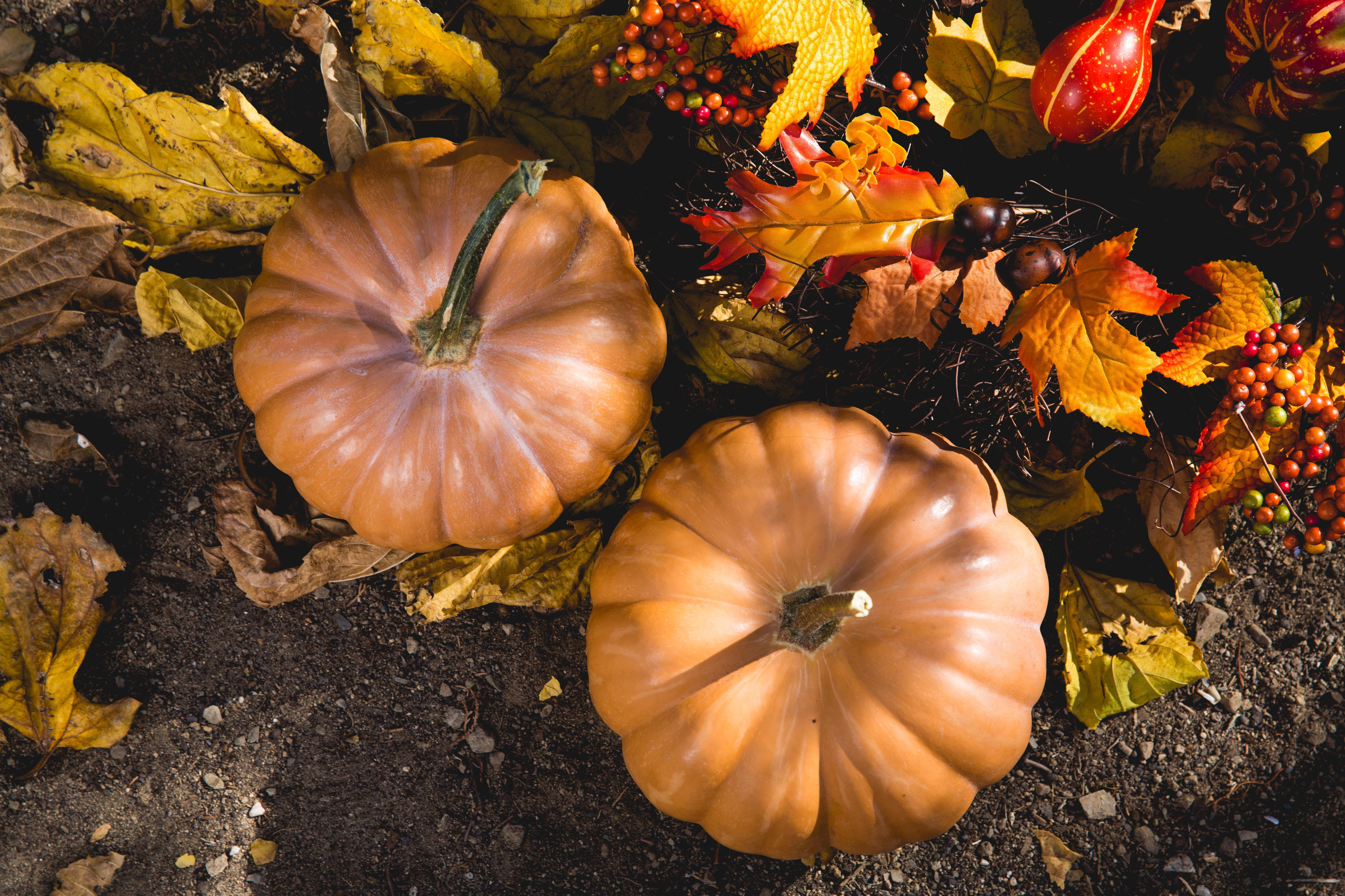 Two Pumpkins on Ground