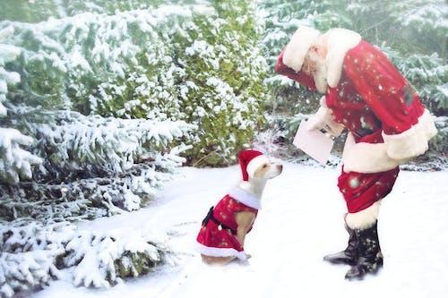 Free stock photo of christmas, christmas scene, dog with santa, holiday