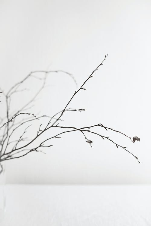 Thin delicate branches of plant placed in vase against white background in daylight
