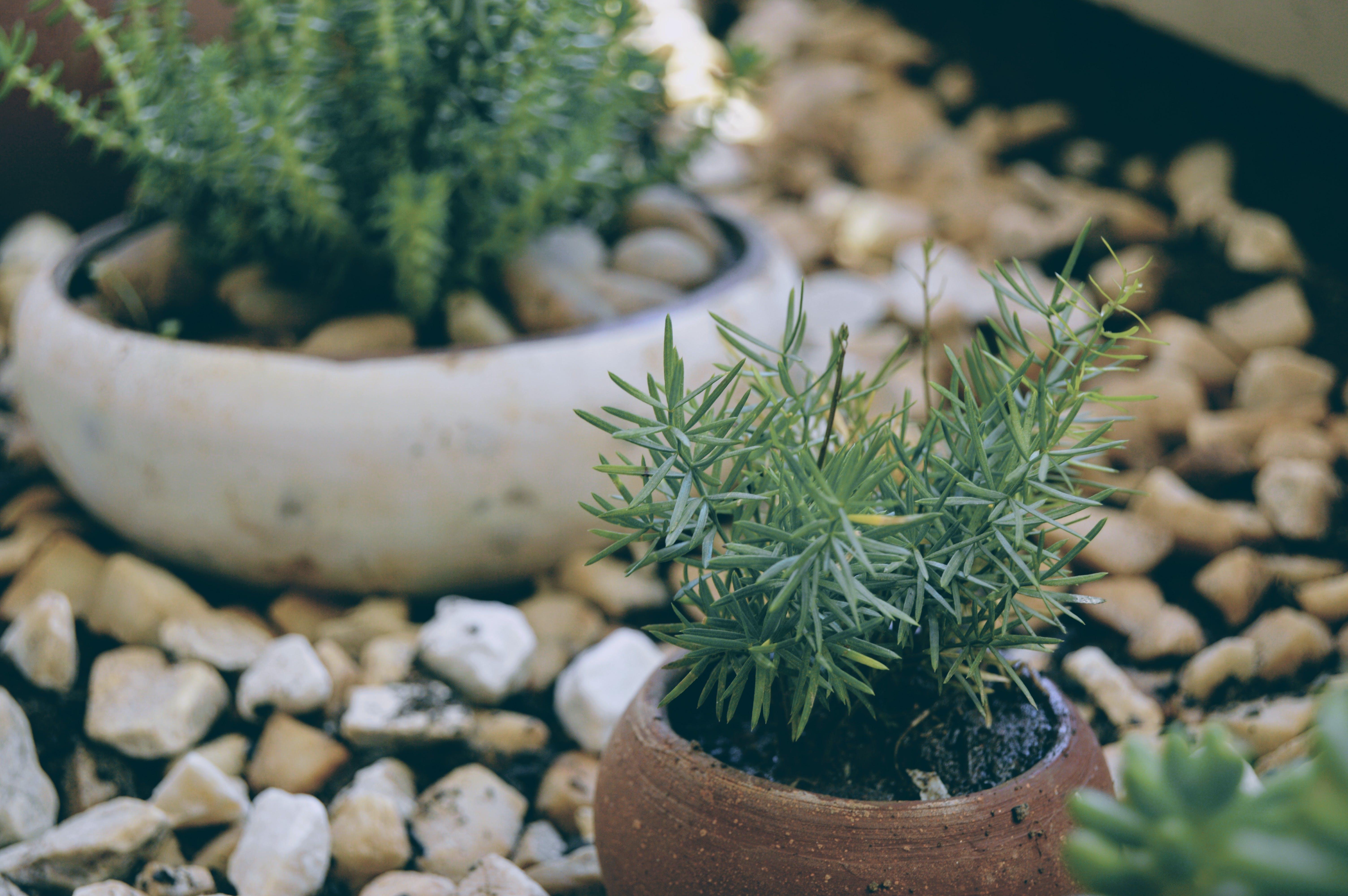 Foto stok gratis alam, berbayang, berfokus, kebun