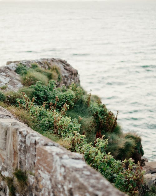 High angle of rocky cliff covered with green plants and moss located on shore of wavy ocean on dull day