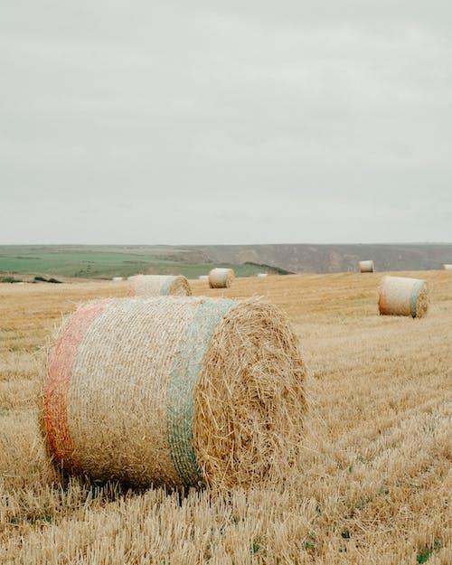 白色的天空下的棕色草田