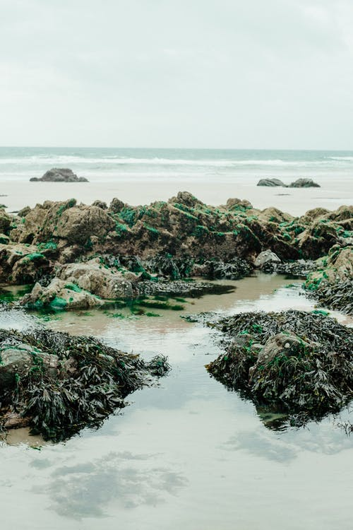 Sandy seashore with seaweed and stones during low tide