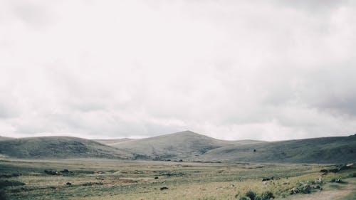 Champ D'herbe Verte Près De La Montagne Sous Les Nuages Blancs