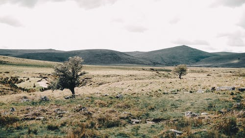 Landscape of meadow with trees growing near hill slope