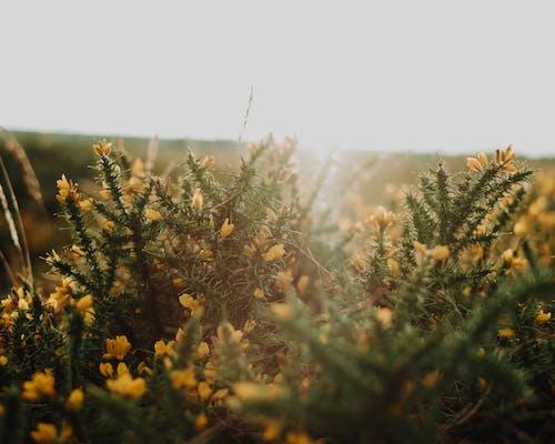 Fotos de stock gratuitas de al aire libre, arbusto, armonía