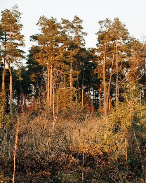 Braune Und Grüne Bäume Unter Weißem Himmel