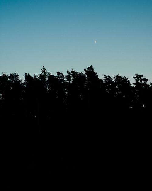 Tall trees under blue night sky