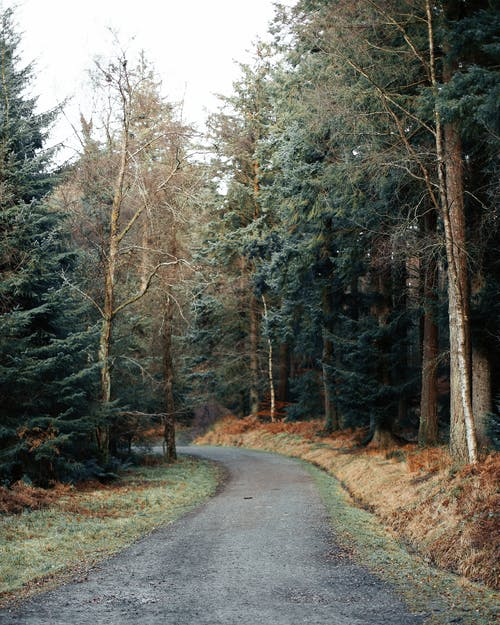 Empty narrow path through mixed forest