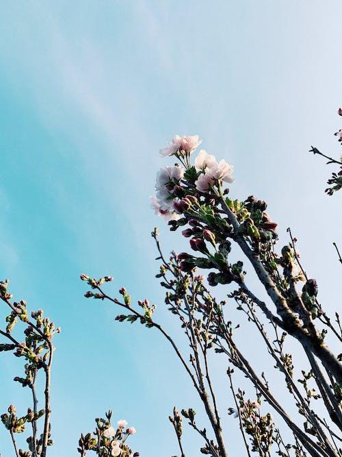 Blooming flowers growing under blue sky