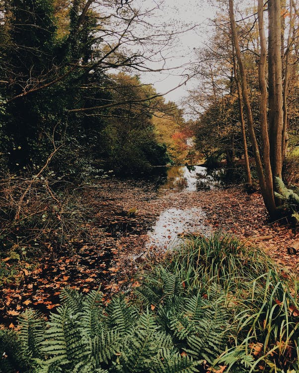 Picturesque landscape of autumn woodland with fallen leaves on swampy terrain and bushes