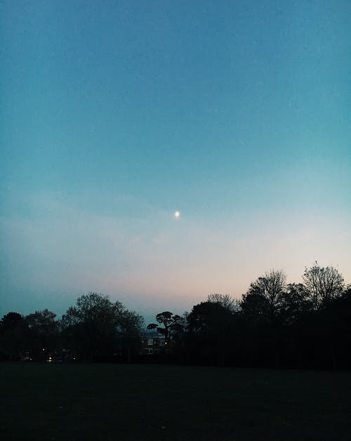 Picturesque scenery of grassy field and trees under clear blue sky with bright star at night