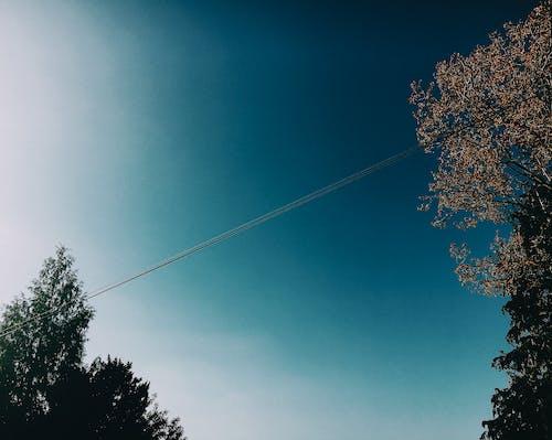 Árbol Verde Bajo Un Cielo Azul