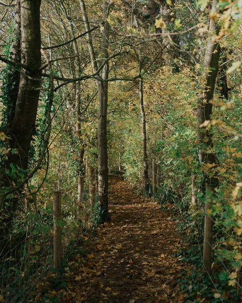 Empty walkway covered with foliage leading through woods with green and yellow leaves near wire fence in nature in autumn day