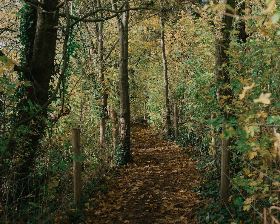 Path between autumn trees near fence