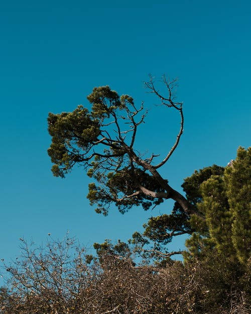 From below of high inclined tree with wavy branches growing under cloudless sky in daytime