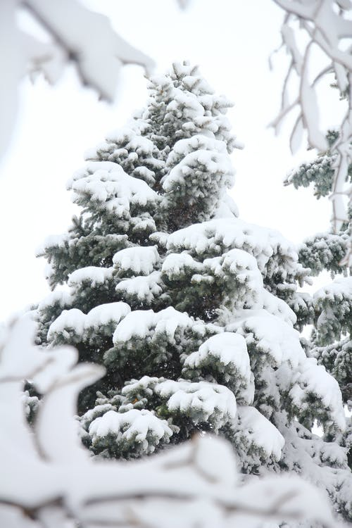 Free stock photo of cold, cold weather, heavy snow