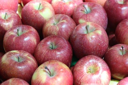 Free stock photo of apple, apple tree, fruit