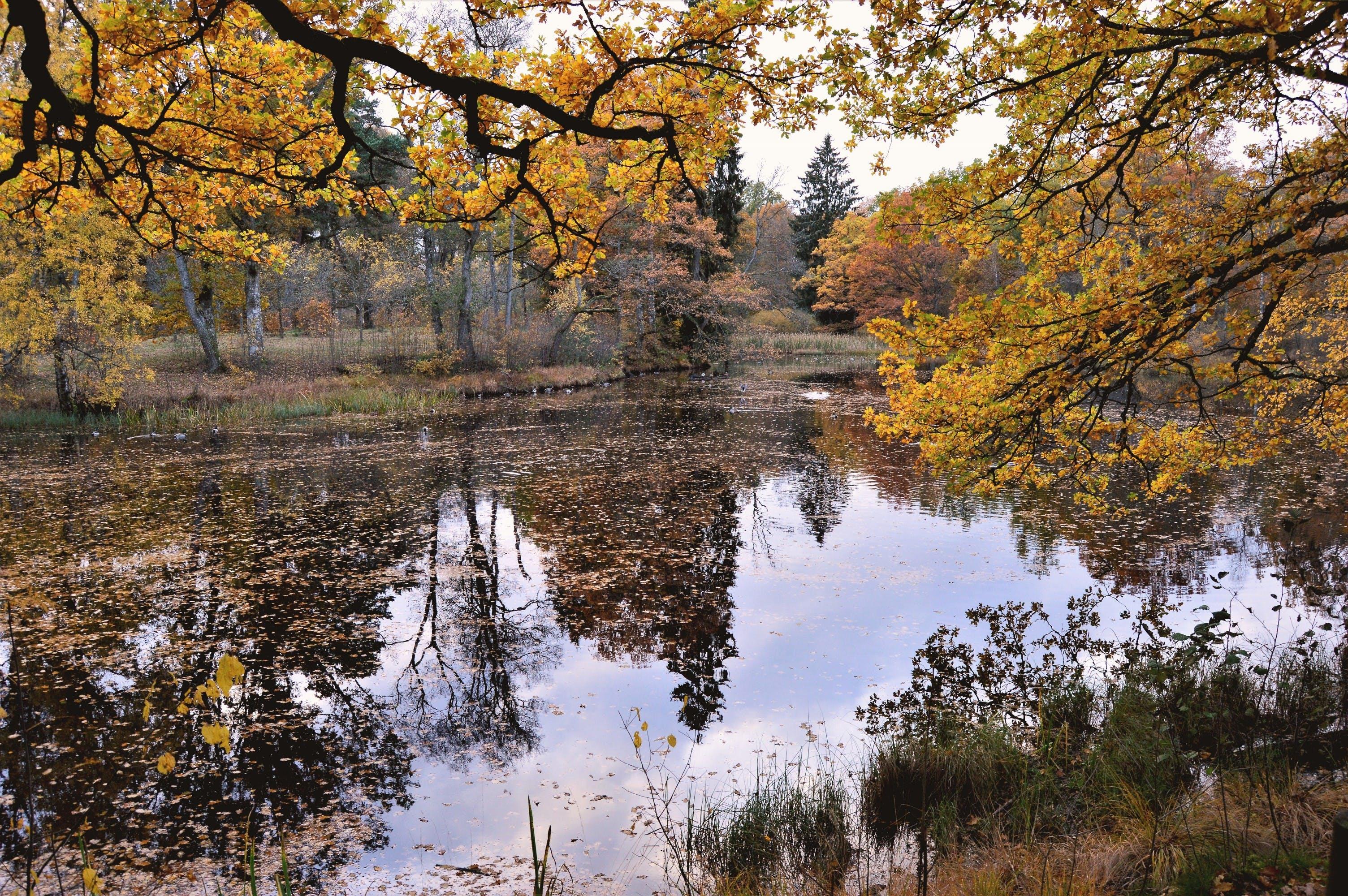 Free stock photo of beautiful, nature, reflection, sweden
