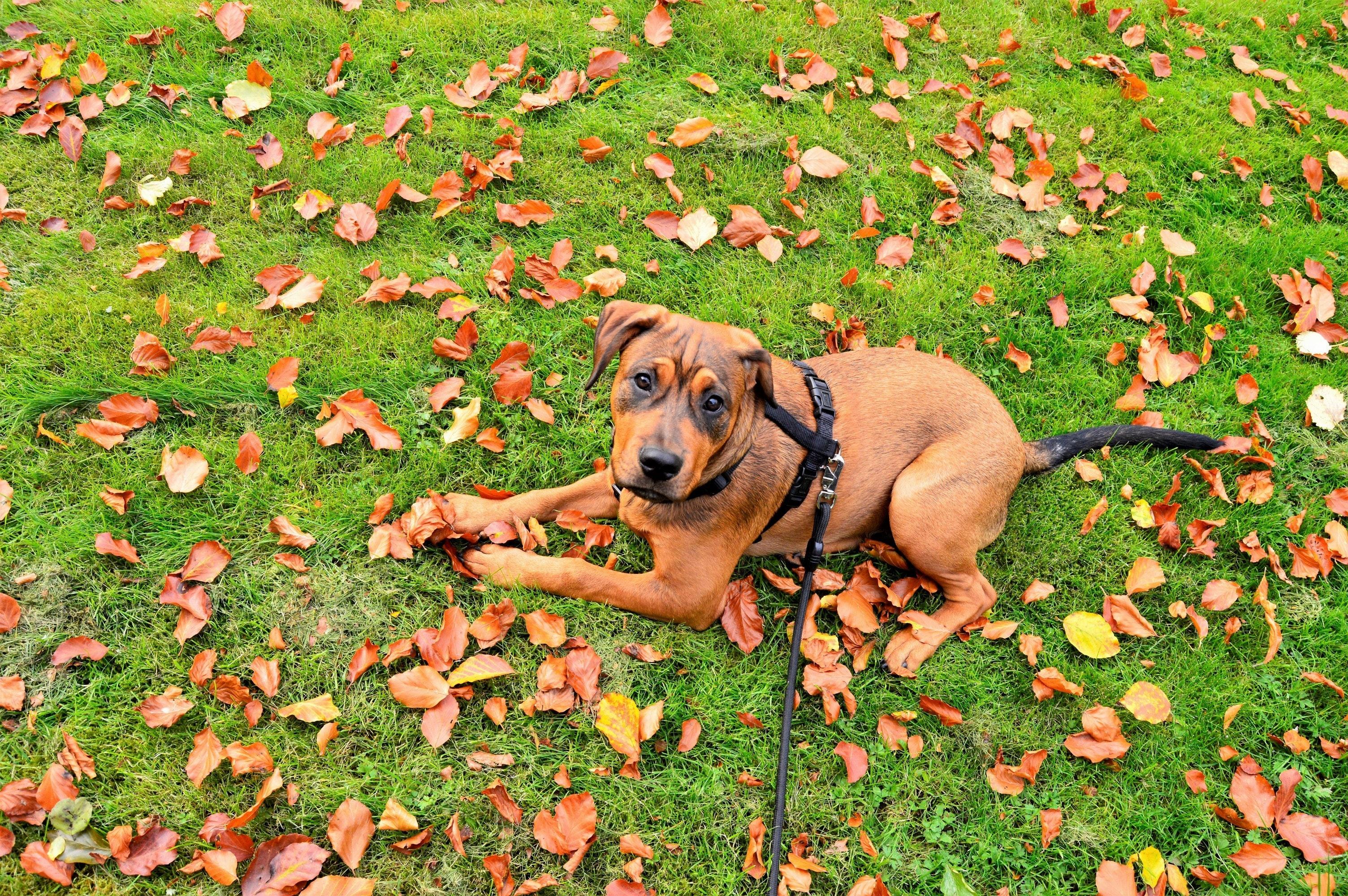 500+ Beautiful Dog Leash Photos