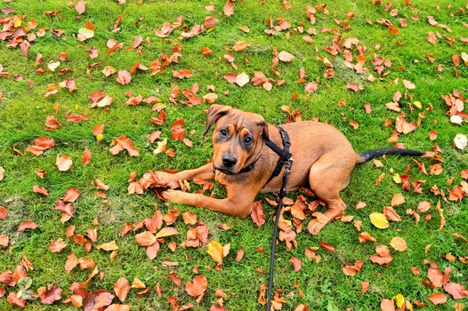 Free stock photo of field, garden, animal, dog