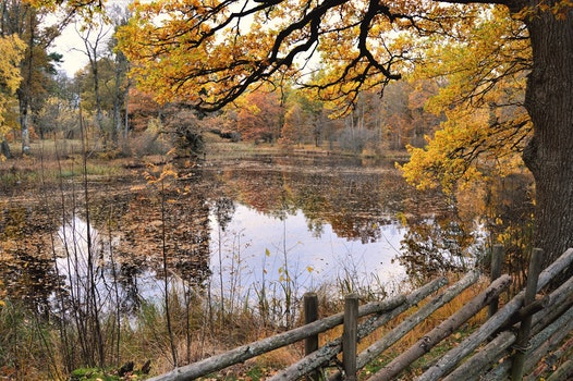 Kostenloses Stock Foto zu natur, wasser, bäume, draußen
