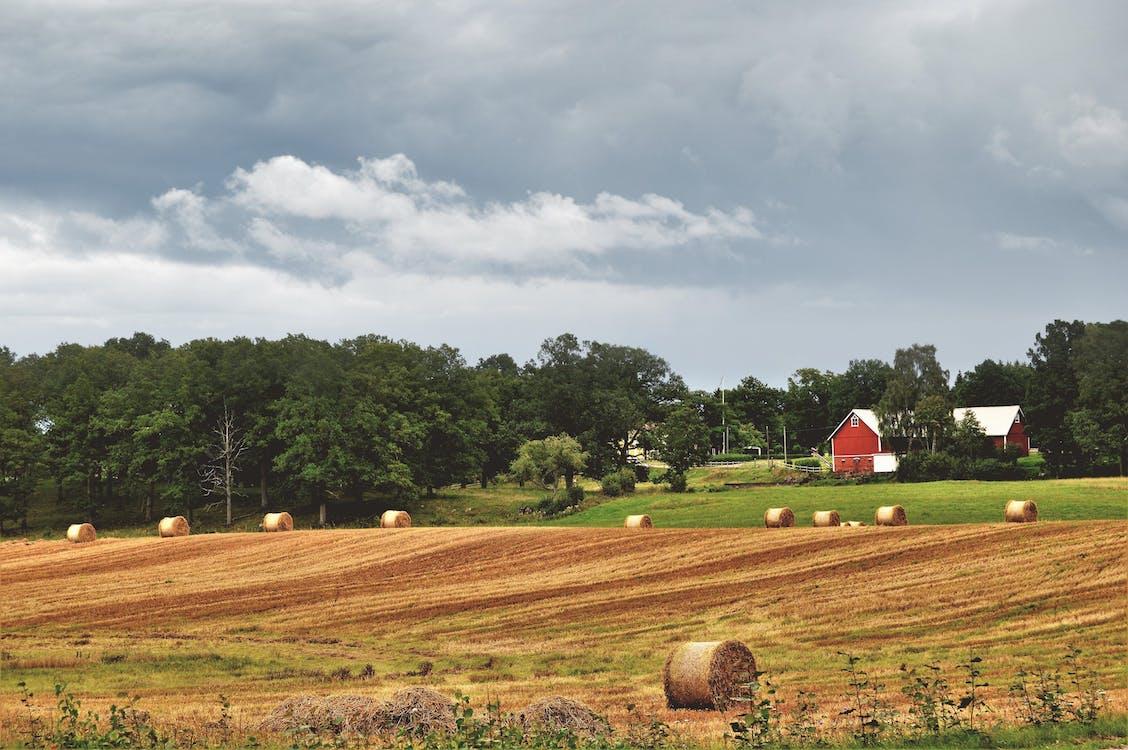 Hay Rolls on Crop Field
