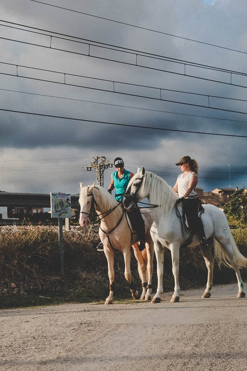 at, atlı, aygır, binici içeren Ücretsiz stok fotoğraf
