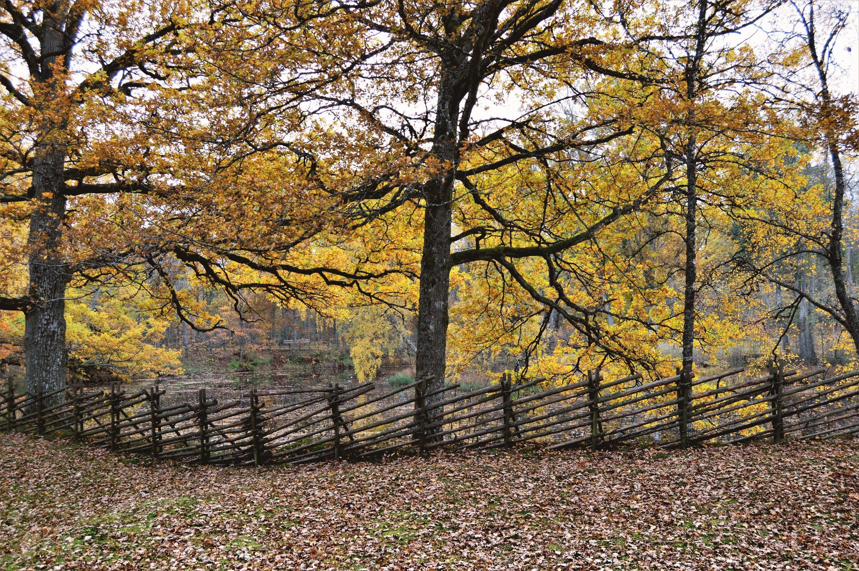 Free stock photo of autumn, beautiful, fall, fence