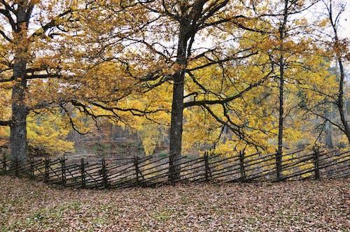 Free stock photo of beautiful, fence, nature, reflection