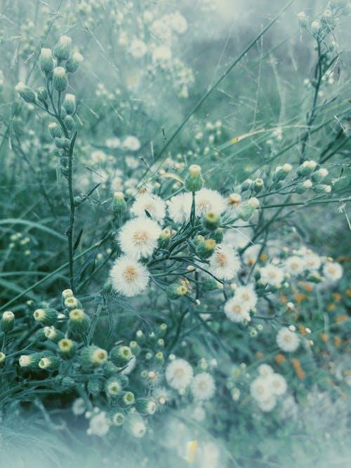 beleza na natureza, 增長, 夏天, 夏季 的 免費圖庫相片