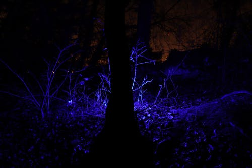Free stock photo of blue light, foliage, night