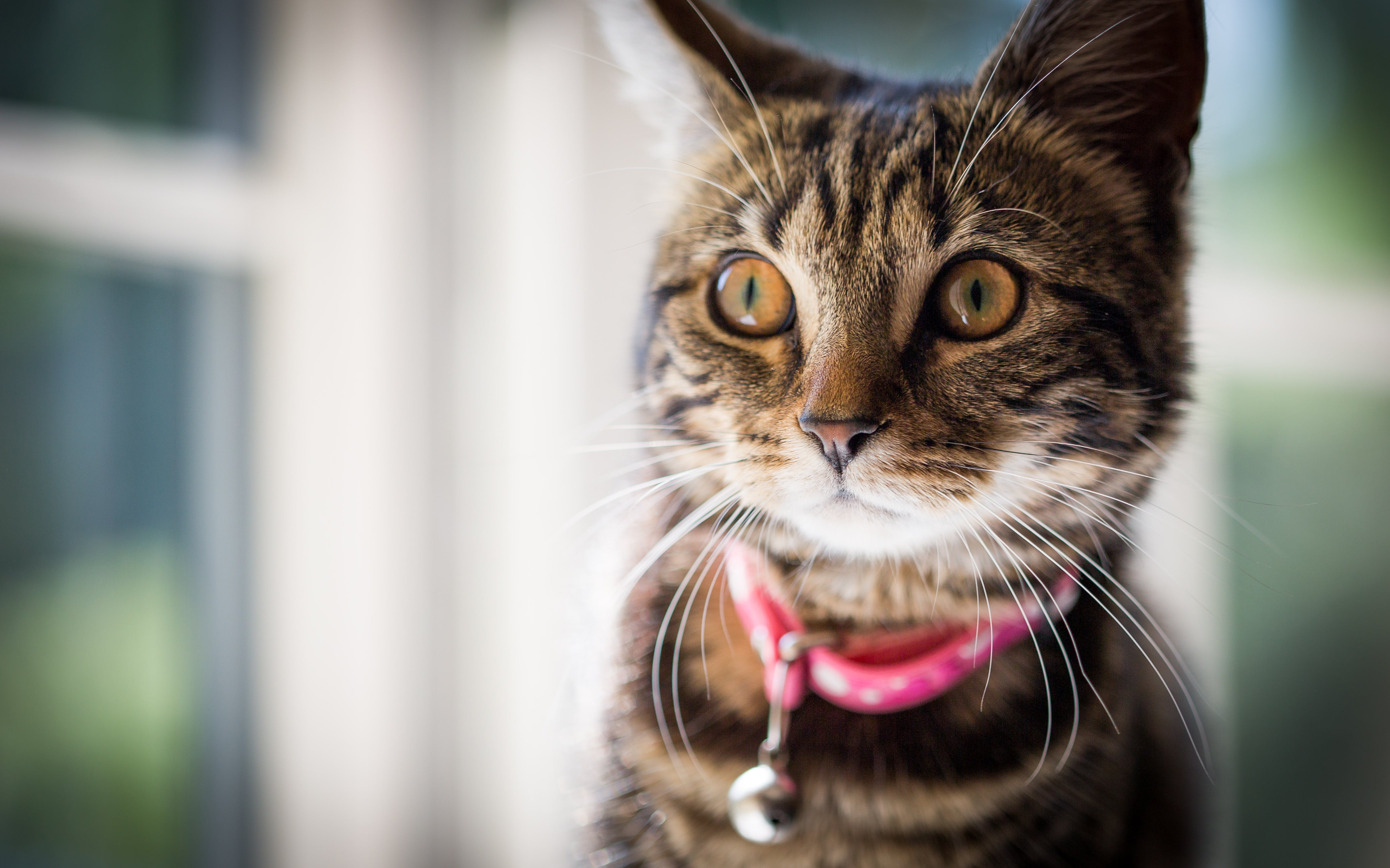 Free stock photo of kitten, cat, stare, tabby