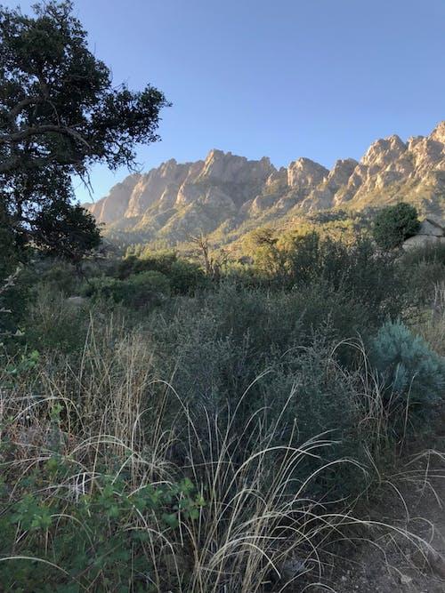 Kostenloses Stock Foto zu berge, new-mexiko, wanderweg, wildnis