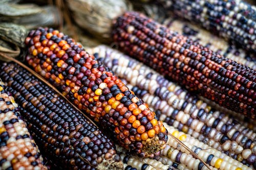 Close-Up Shot of Corns