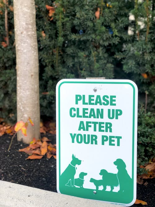Free stock photo of animal, backyard, canine