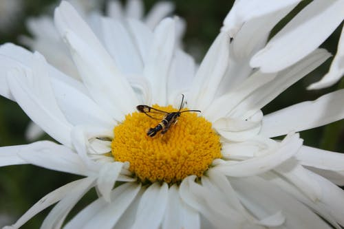 Free stock photo of flower and insect, insect, perennial