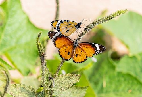 Butterflies on Green Plant