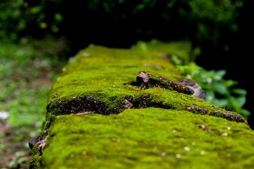 Безкоштовне стокове фото на тему «зелений, камінь, шпалери»