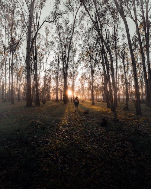 Immagine gratuita di albero, ambiente, anonimo