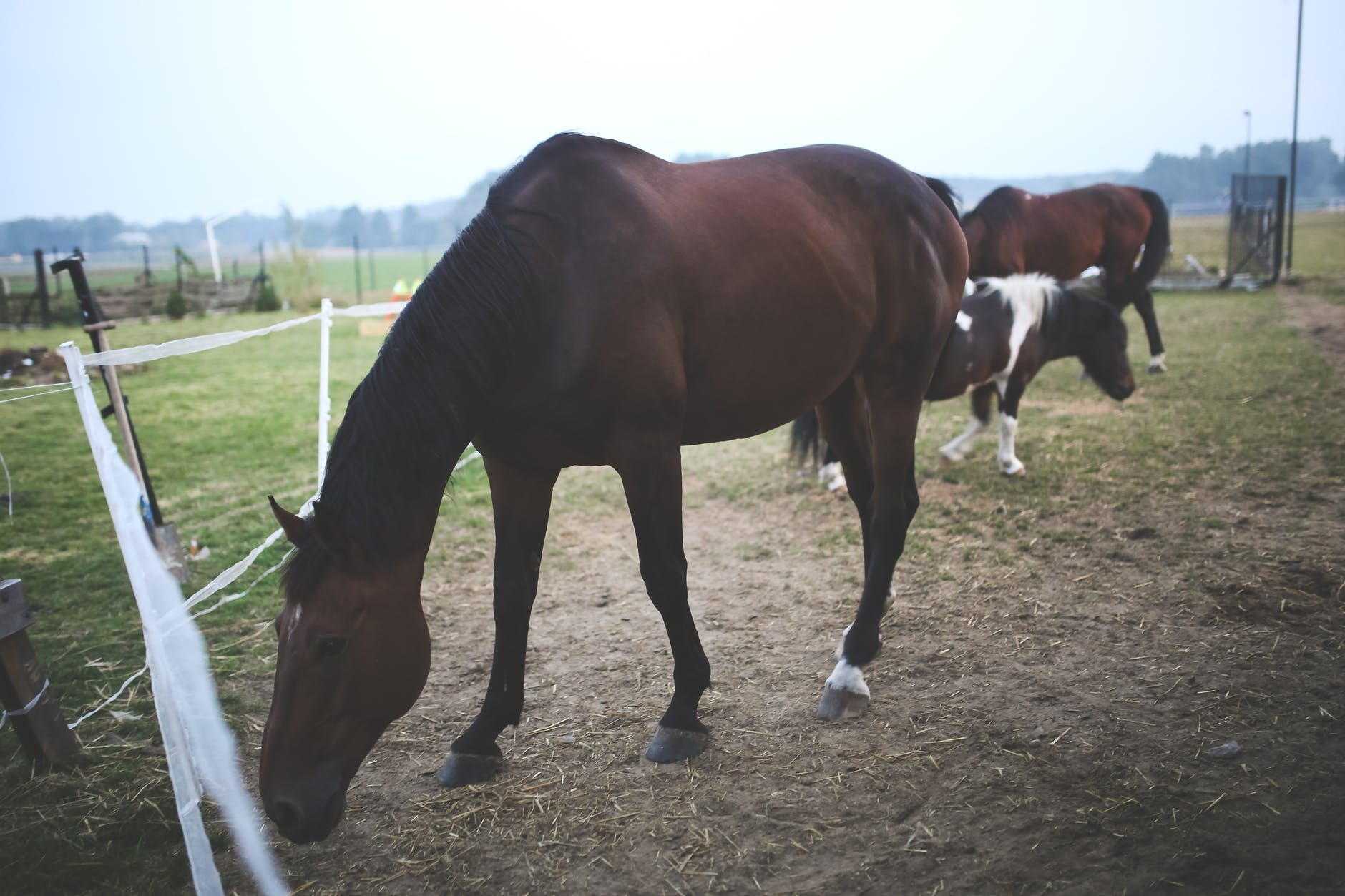 horses inside the fences